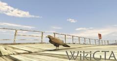 GTAV Chickenhawk.jpg