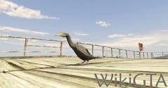 GTAV Greatcormorant.jpg