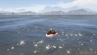 Seashark