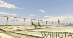GTAV Seagull.jpg
