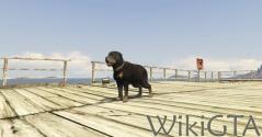 GTAV Rottweiler.jpg