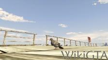 GTAV Pigeon.jpg