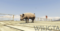 GTAV Pig.jpg
